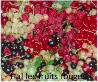 Fruit-Petits-Fruits-Rouges